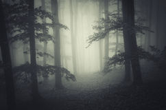 Mysterious fog trough trees in dark scary forest Royalty Free Stock Images