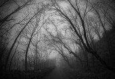 Mysterious foggy alley Royalty Free Stock Images