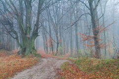 Mysterious foggy autumn forest Stock Photos