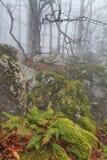 Mysterious foggy autumn forestt Royalty Free Stock Photos