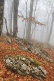 Mysterious foggy autumn forestt Stock Photo
