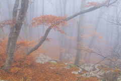 Mysterious foggy autumn forestt Royalty Free Stock Photography