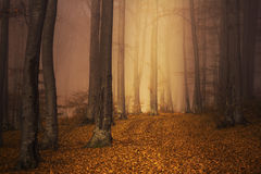Mysterious foggy forest autumn color Royalty Free Stock Photos
