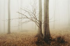 Mysterious foggy forest in autumn Stock Photos
