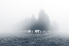 Mysterious foggy forest in black and white Stock Photo