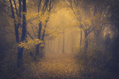 Mysterious foggy forest with a fairytale look Royalty Free Stock Photography