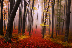 Mysterious foggy forest with a fairytale look Royalty Free Stock Photo