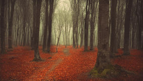 Mysterious foggy forest with a fairytale look Stock Photography