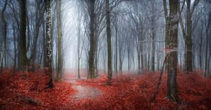 Mysterious foggy forest with a fairytale look Stock Image