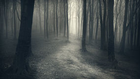Mysterious foggy forest with a fairytale look Stock Images
