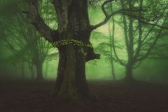 Mysterious foggy forest Stock Photo
