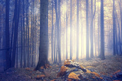 Mysterious foggy forest landscape background Stock Photo
