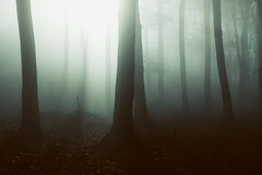Mysterious foggy forest light behind trees. Gloomy dark autumn day. Filtered image Royalty Free Stock Photos