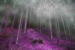 Mysterious foggy forest with magic road , gloomy dark magic fore Royalty Free Stock Images