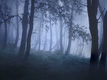 Mysterious foggy forest stock photos