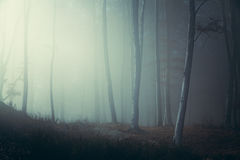 Mysterious foggy forest trail. Gloomy dark autumn day. Filtered image Stock Images