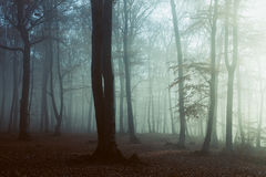 Mysterious foggy forest trail. Gloomy dark autumn day. Filtered image Royalty Free Stock Photo