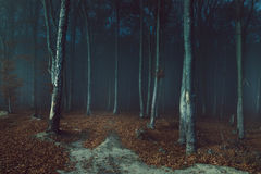 Mysterious foggy forest trail. Gloomy dark autumn day. Filtered image Royalty Free Stock Image