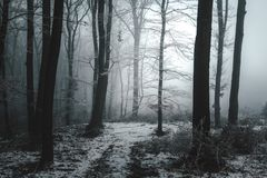 Strange light around tree in foggy forest royalty free stock image