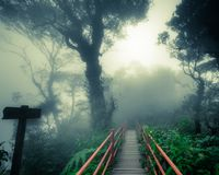 Mysterious foggy forest with wooden bridge and signpost. Mysterious landscape of foggy forest with wooden bridge and weathered signpost. Surreal beauty of exotic Stock Images