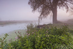 Mysterious foggy landscape with trees and flower Royalty Free Stock Photos