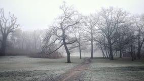 Mysterious foggy park Stock Photos