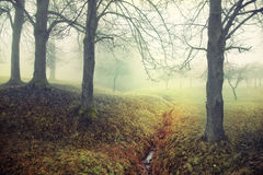 Mysterious foggy scene Royalty Free Stock Image