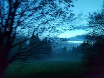 Mysterious foggy woods. The dark and mysterious woods engulfed by fog one evening Stock Photography