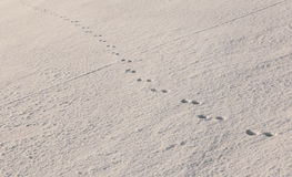 Mysterious footprints in untouched snow Stock Photo