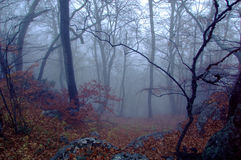 Mysterious forest. With a view of coming fog Stock Image
