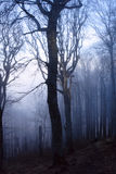 Mysterious forest Royalty Free Stock Photo