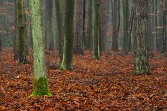 Mysterious forest. Stock Photography