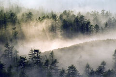 Mysterious forest. Fog in the forest, sunlight, fog season, the prospect. Magadan Region Royalty Free Stock Photography