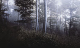 Mysterious forest Stock Photo