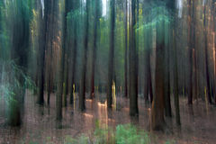 Mysterious Forest Stock Image
