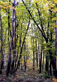 Mysterious forest.Autumn time.Beautiful time on the  year. Royalty Free Stock Photography