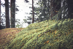 Mysterious forest background with moss grass and twigs in vintage colors. Mysterious forest background with moss grass and twigs in vintage retro colors Royalty Free Stock Photo