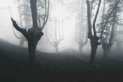 Mysterious forest in black and white Stock Photography