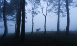 Mysterious forest with a cow Royalty Free Stock Photo