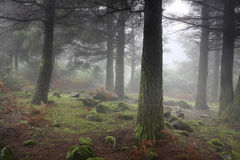 Mysterious forest, elfs and hobbit home. Pass Paso de Poiso, 1400 m above sea level, Madeira Island, Portugal Stock Photo