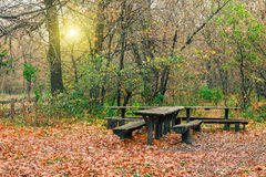 Mysterious forest in the evening after rain. Table and bench in the forest. Picturesque autumn nature. Royalty Free Stock Image