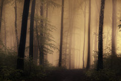 Mysterious forest with fog Royalty Free Stock Photo