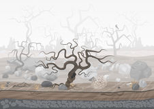 Mysterious forest in fog. Dark spooky halloween landscape scene. Royalty Free Stock Photo