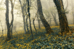 Mysterious forest in fog with green leaves and yellow flowers Royalty Free Stock Image