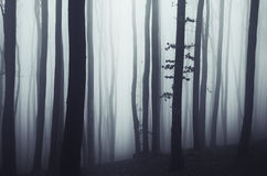 Mysterious forest with fog Royalty Free Stock Photos