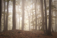 Mysterious forest with fog and light at sunrise Stock Photography