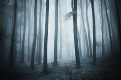 Mysterious forest with fog at night Stock Photos