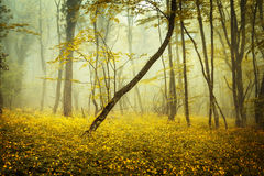 Mysterious forest in fog with orange leaves and yellow flowers Stock Images