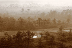 Mysterious Forest Foggy Morning Royalty Free Stock Photos