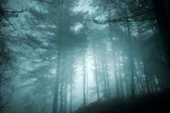 Mysterious forest Royalty Free Stock Photography